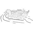 Wild duck vector