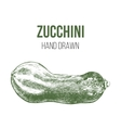 Hand drawn zucchini vector