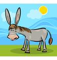 Cartoon of donkey vector