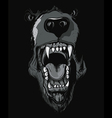 T-shirt design with raging bear vector