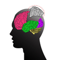 Humen and brain midbrain vector