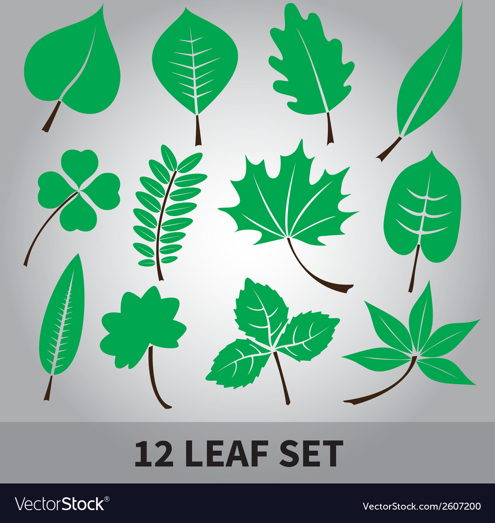 Leaves icon set eps10 vector | Price: 1 Credit (USD $1)