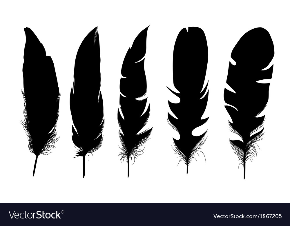Set of black isolated feathers on white background vector | Price: 1 Credit (USD $1)