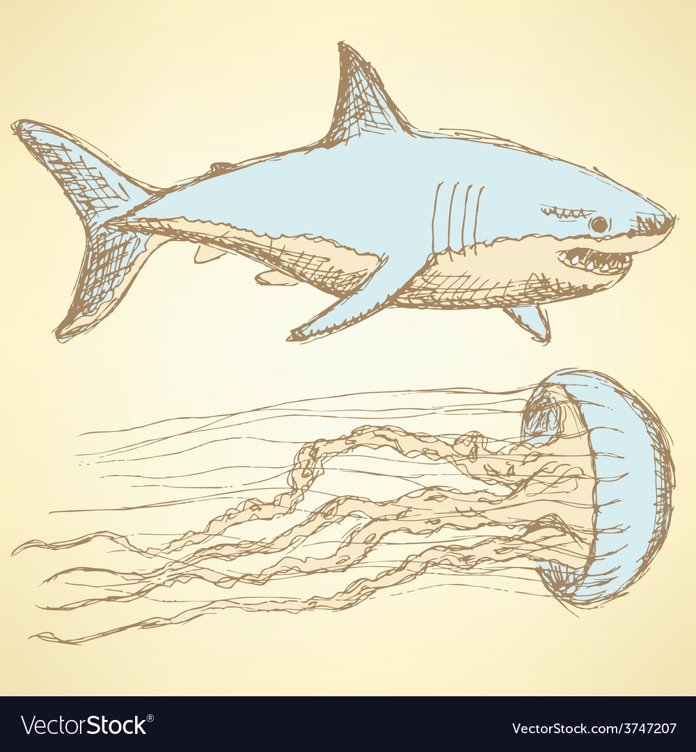 Sketch shark and jellyfish in vintage style vector | Price: 1 Credit (USD $1)