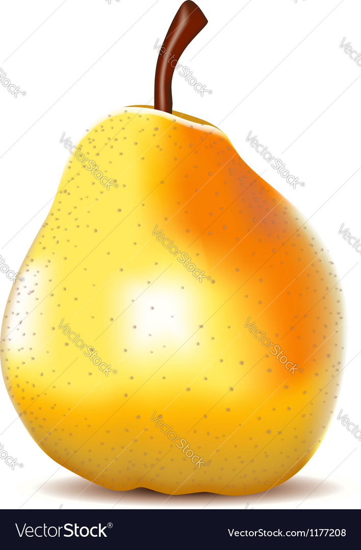 Yellow pear isolated on white vector | Price: 1 Credit (USD $1)