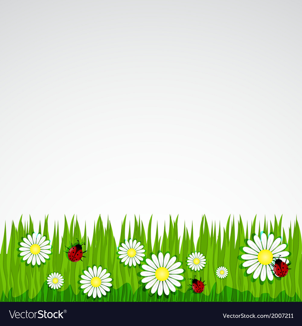 Spring background with grass chamomile vector | Price: 1 Credit (USD $1)