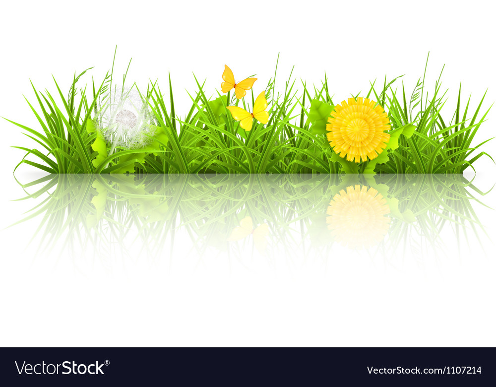 Dandelions and grass vector | Price: 3 Credit (USD $3)