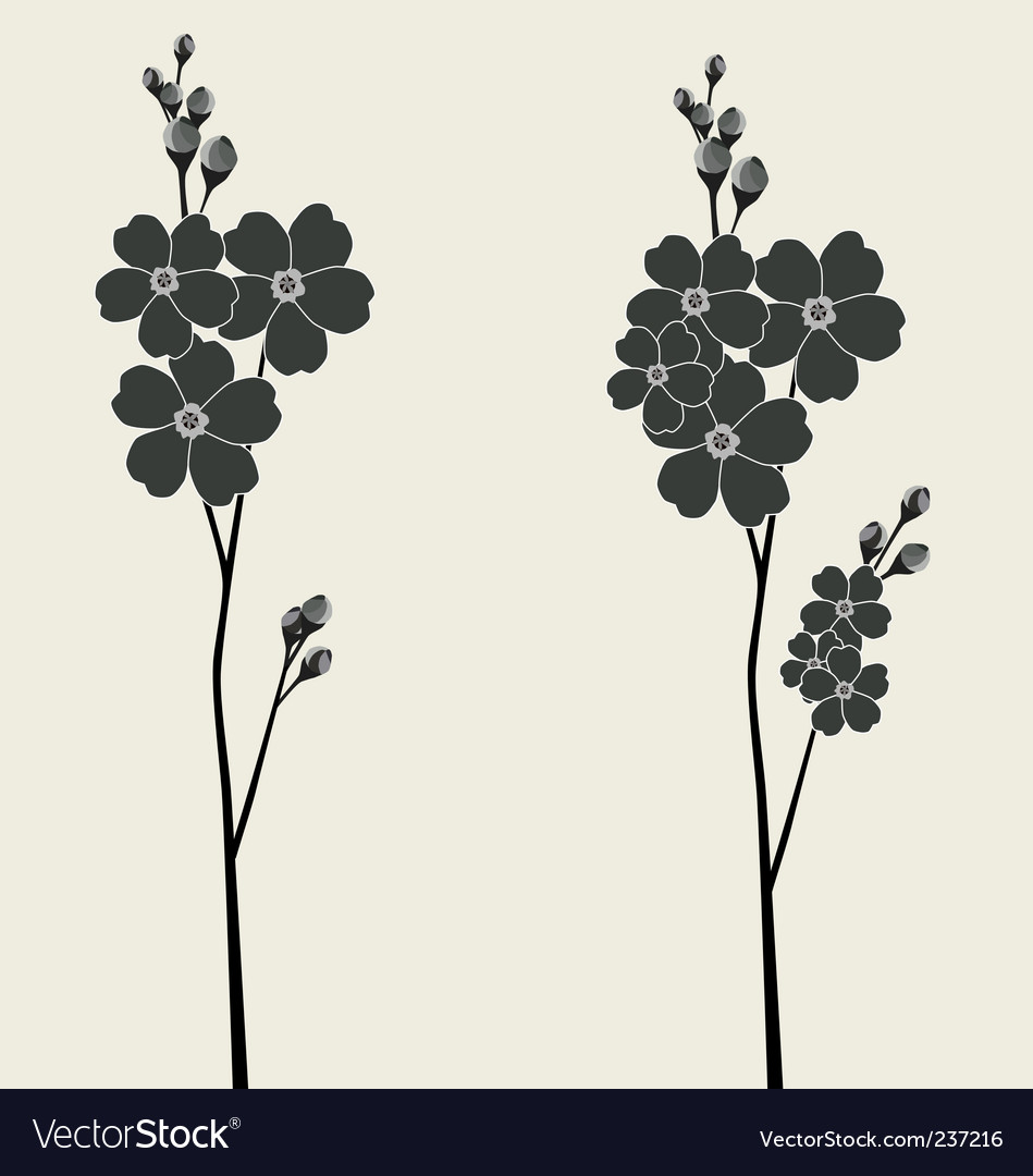 Forget-me-not flower vector | Price: 1 Credit (USD $1)