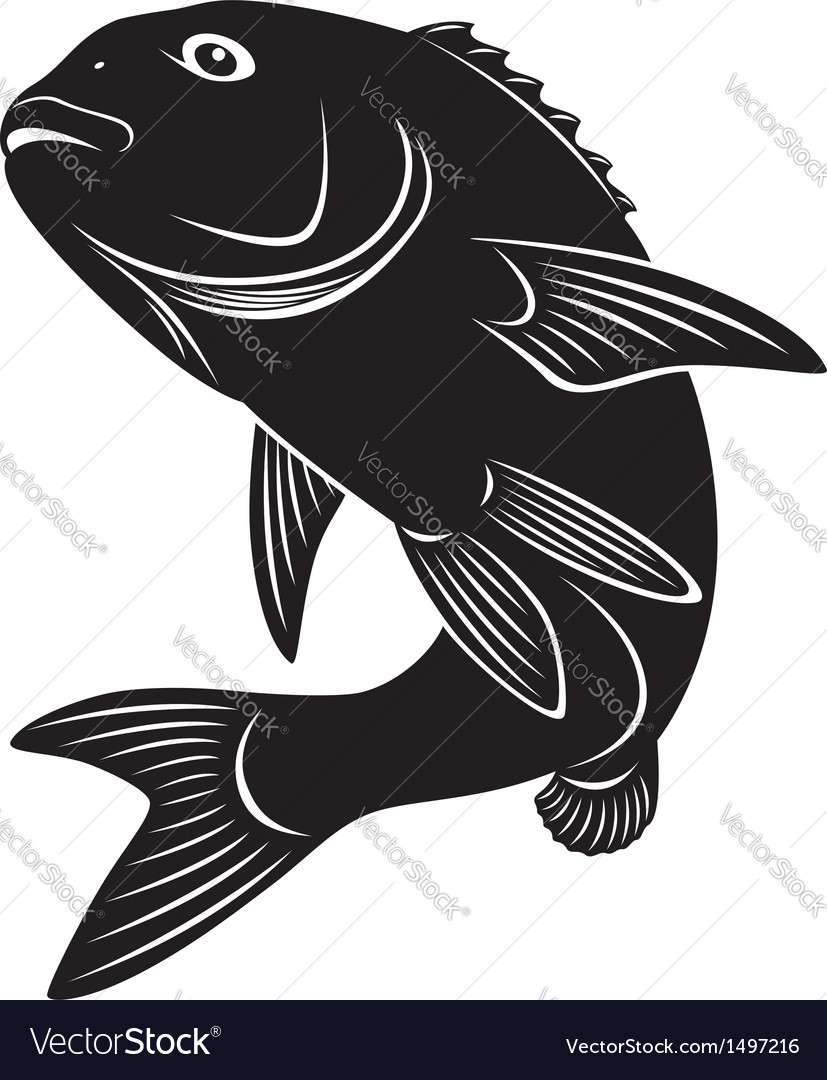 Sea bass vector | Price: 1 Credit (USD $1)