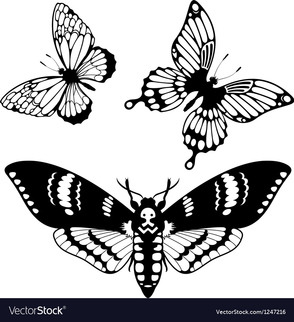 Set of butterfly silhouettes vector | Price: 1 Credit (USD $1)