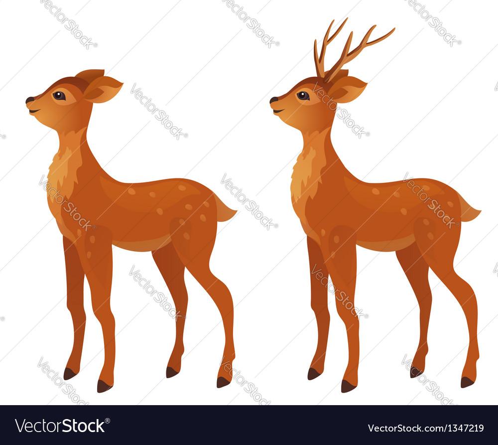 Young deer vector | Price: 1 Credit (USD $1)