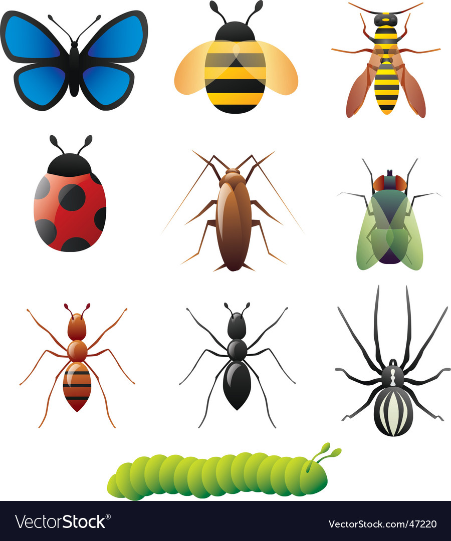Simple insect designs vector | Price: 1 Credit (USD $1)