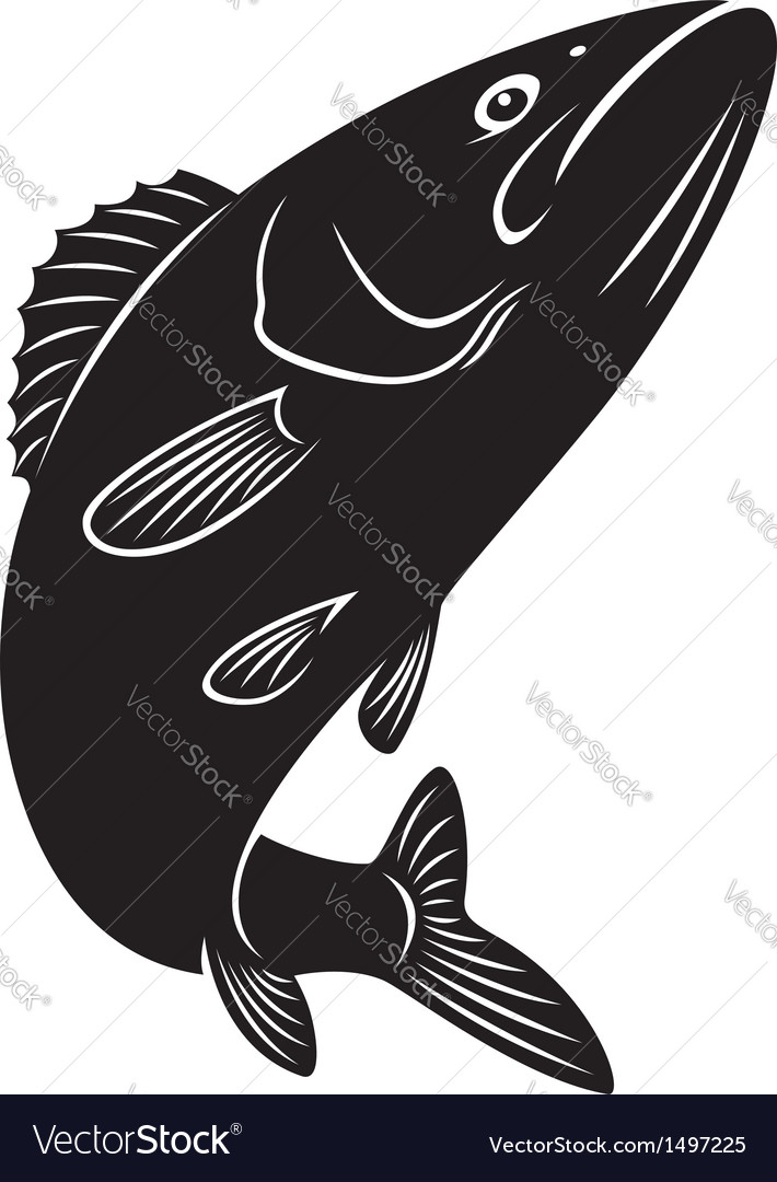 Bass fish vector | Price: 1 Credit (USD $1)