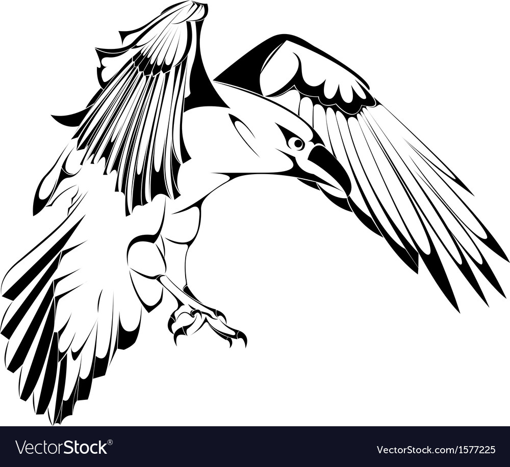 Sketch of crow in vector | Price: 1 Credit (USD $1)