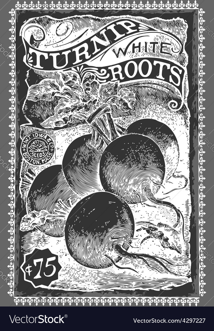 Vintage greengrocer - turnip advertising vector   Price: 3 Credit (USD $3)