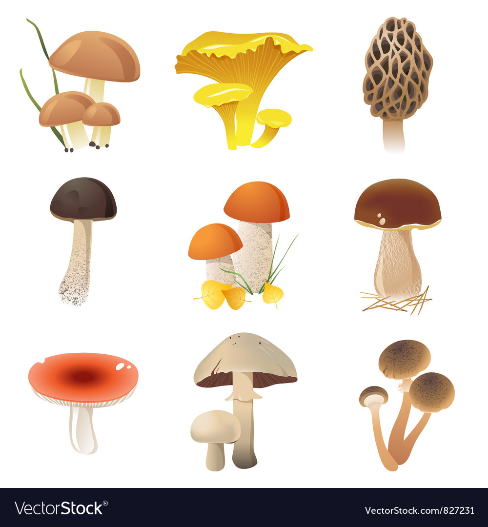 Edible mushrooms vector | Price: 3 Credit (USD $3)