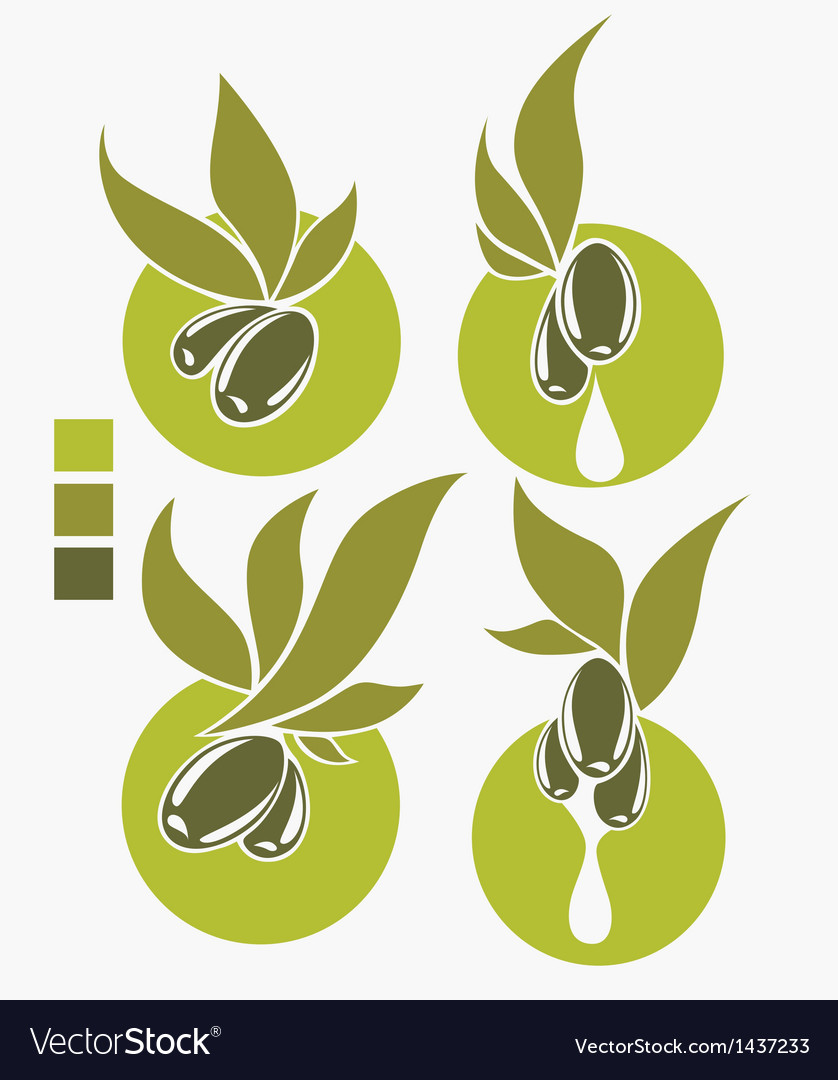Collection of fresh and health olive oil symbols vector | Price: 1 Credit (USD $1)