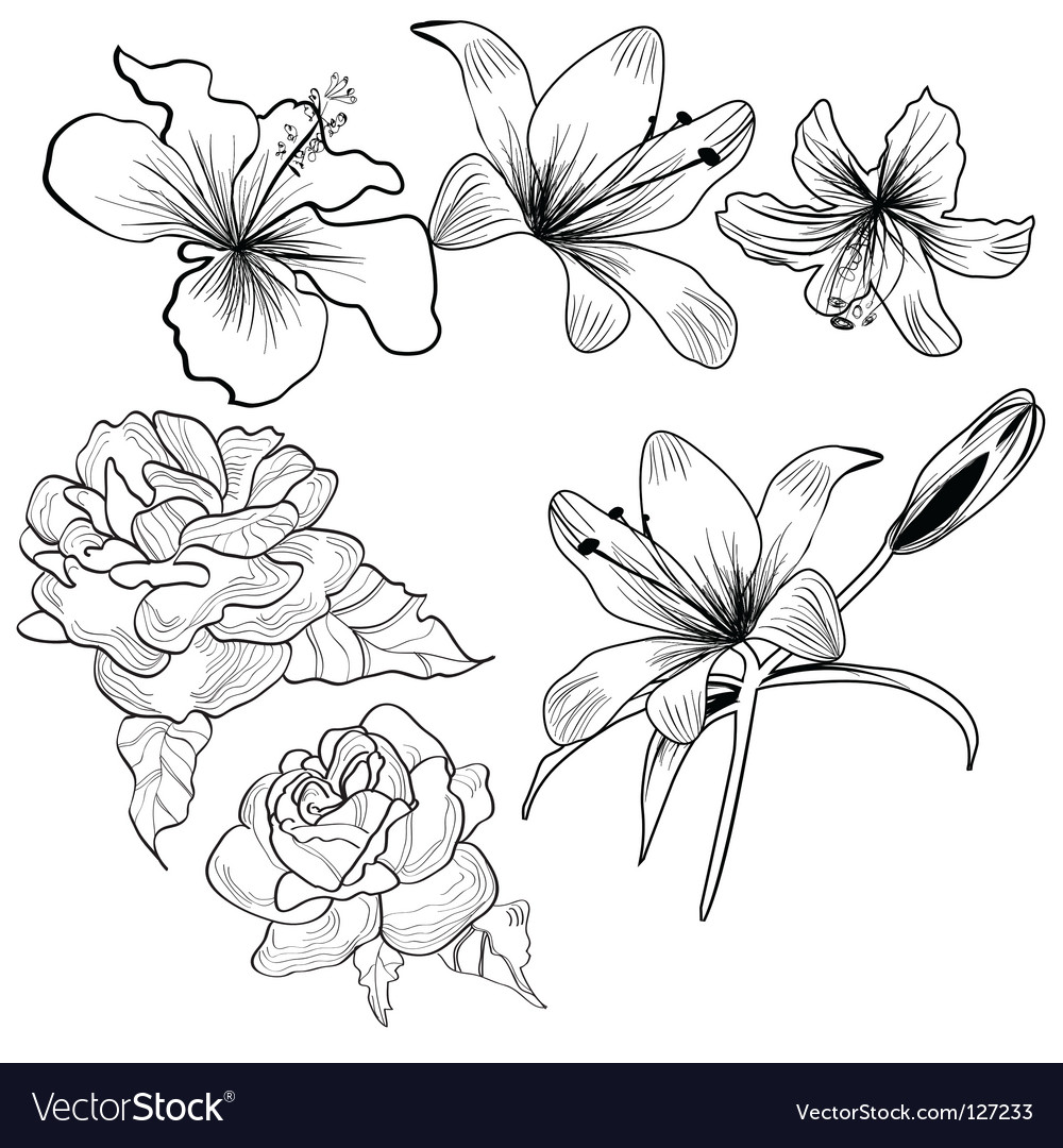 Sketch with flowers vector | Price: 1 Credit (USD $1)
