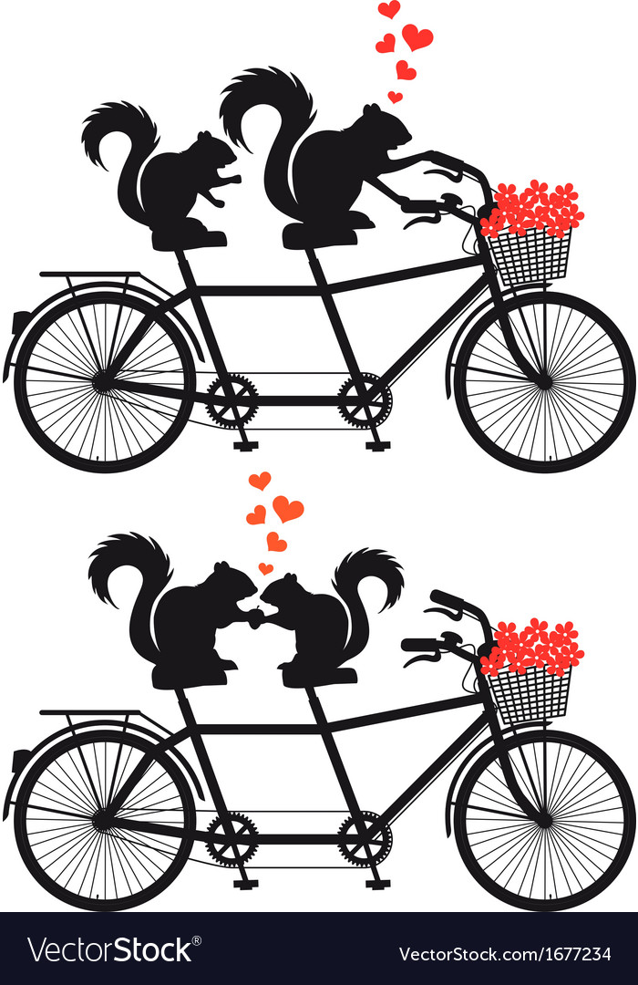 Squirrels in love on bicycle vector | Price: 1 Credit (USD $1)