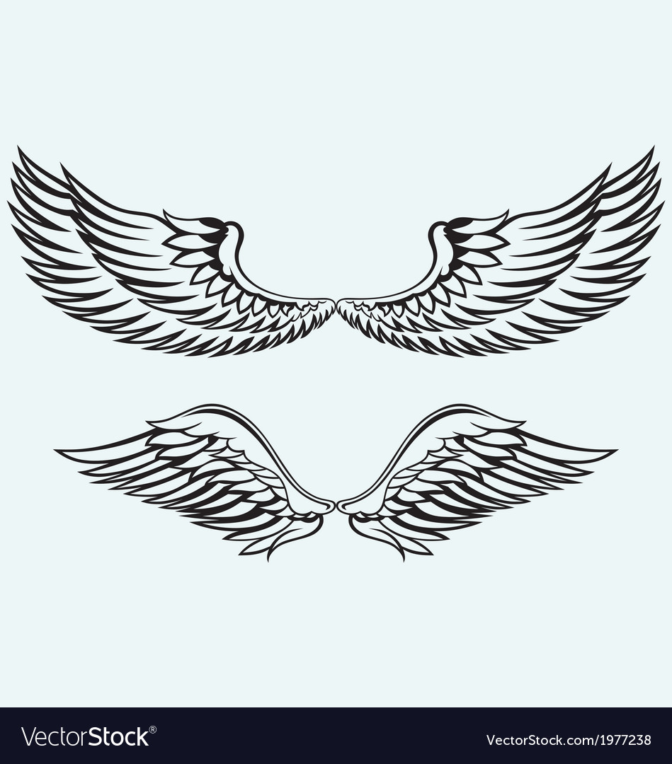 Angel wings vector | Price: 1 Credit (USD $1)