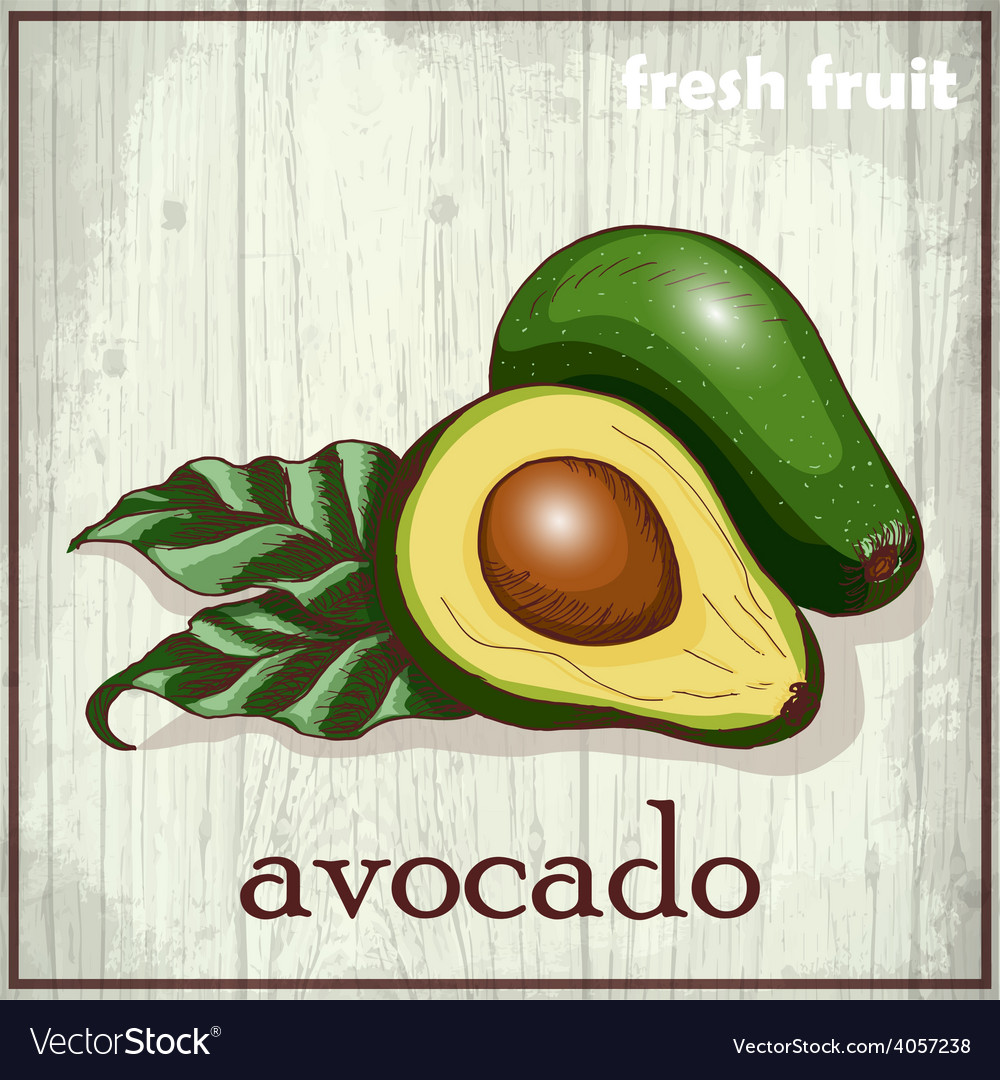 Hand drawing of avocado fresh fruit vector | Price: 3 Credit (USD $3)