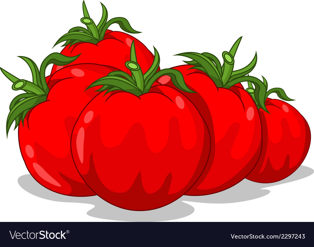 Fresh red tomatoes vector | Price: 1 Credit (USD $1)