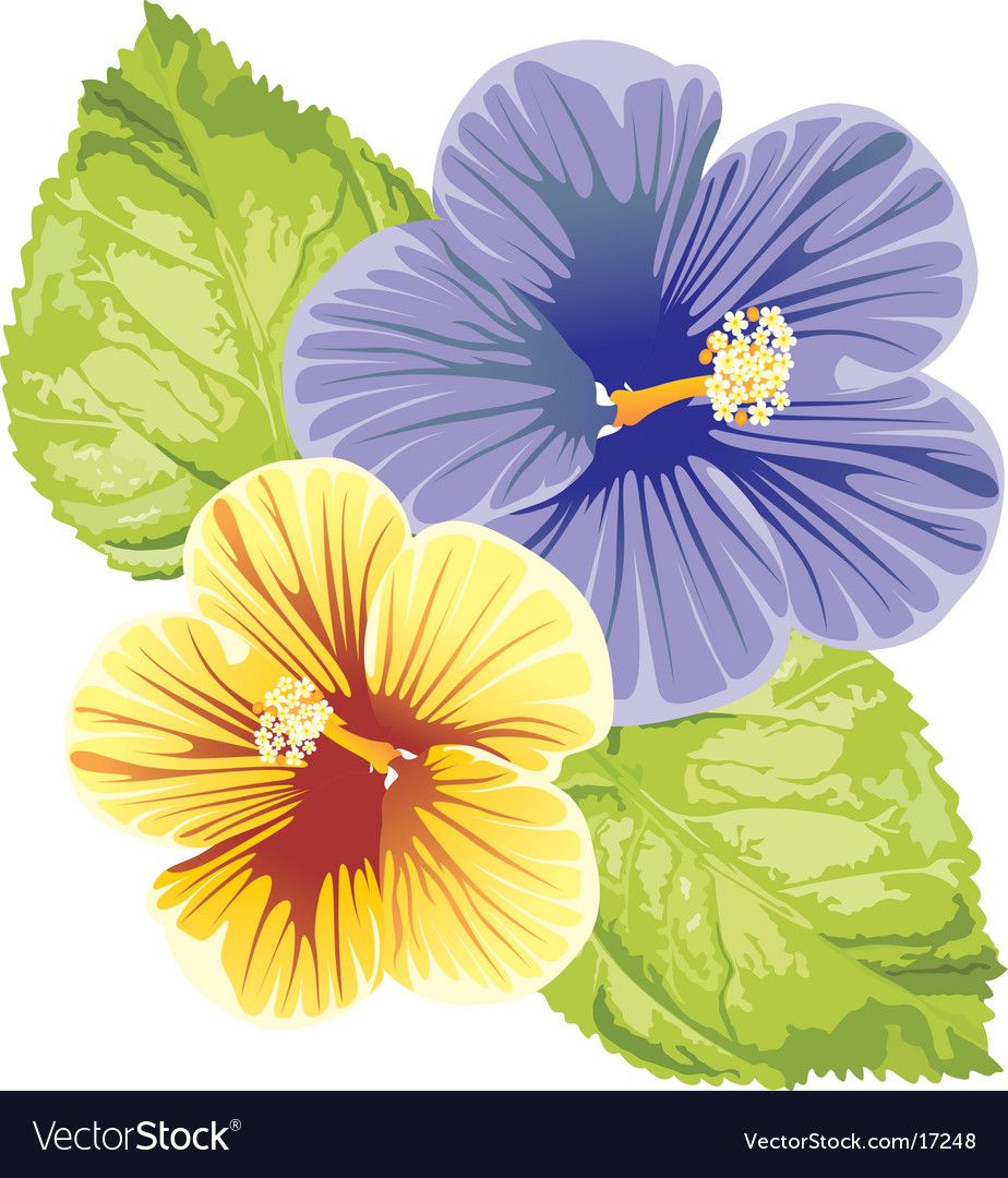 Hibiscus design vector | Price: 1 Credit (USD $1)
