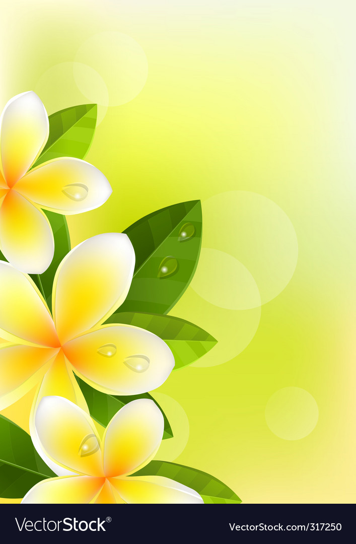 Tropic background with frangipani vector | Price: 1 Credit (USD $1)