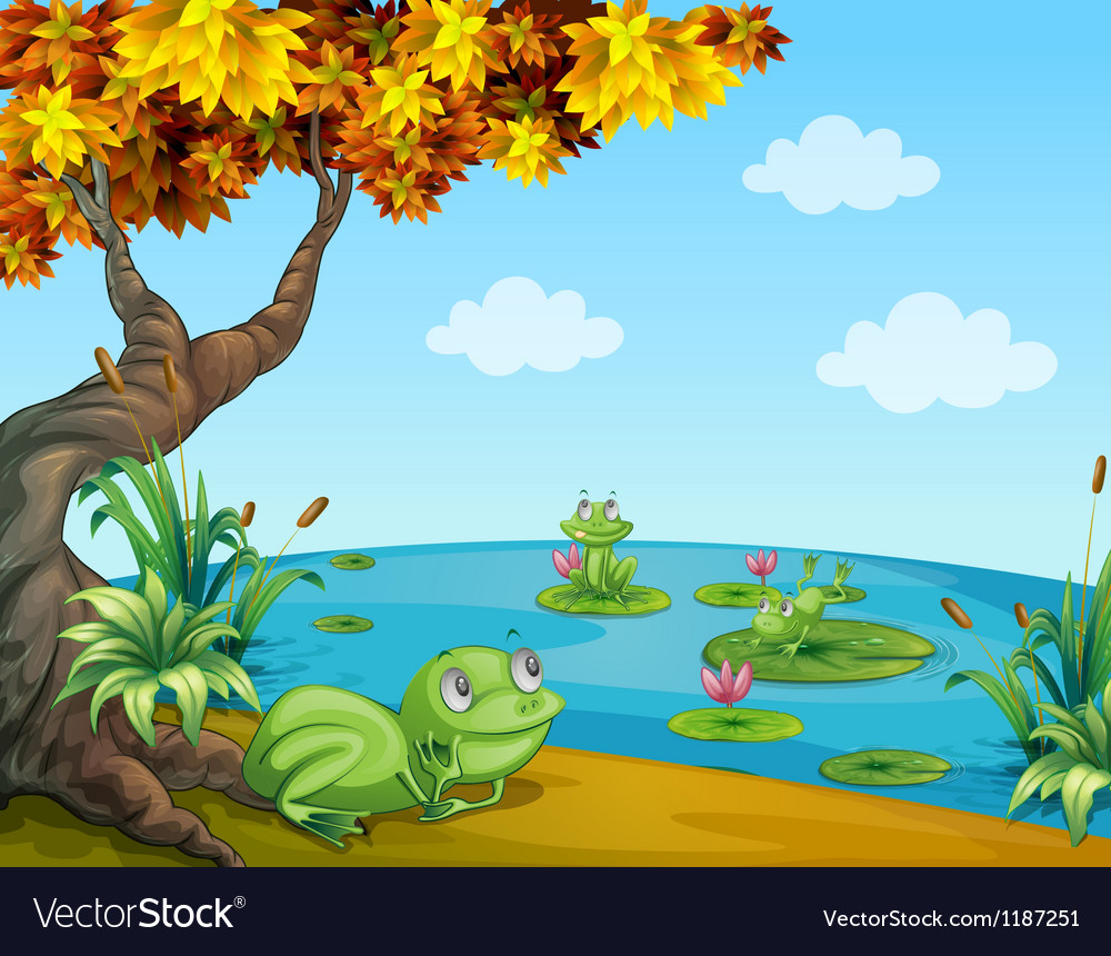 Three green frogs at the pond vector | Price: 1 Credit (USD $1)