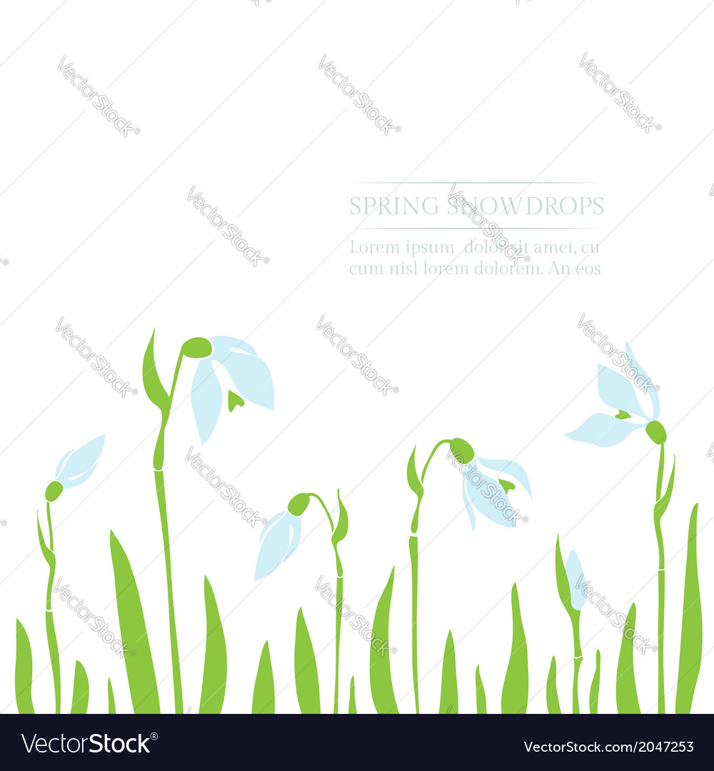 Snowdrops spring background vector | Price: 1 Credit (USD $1)
