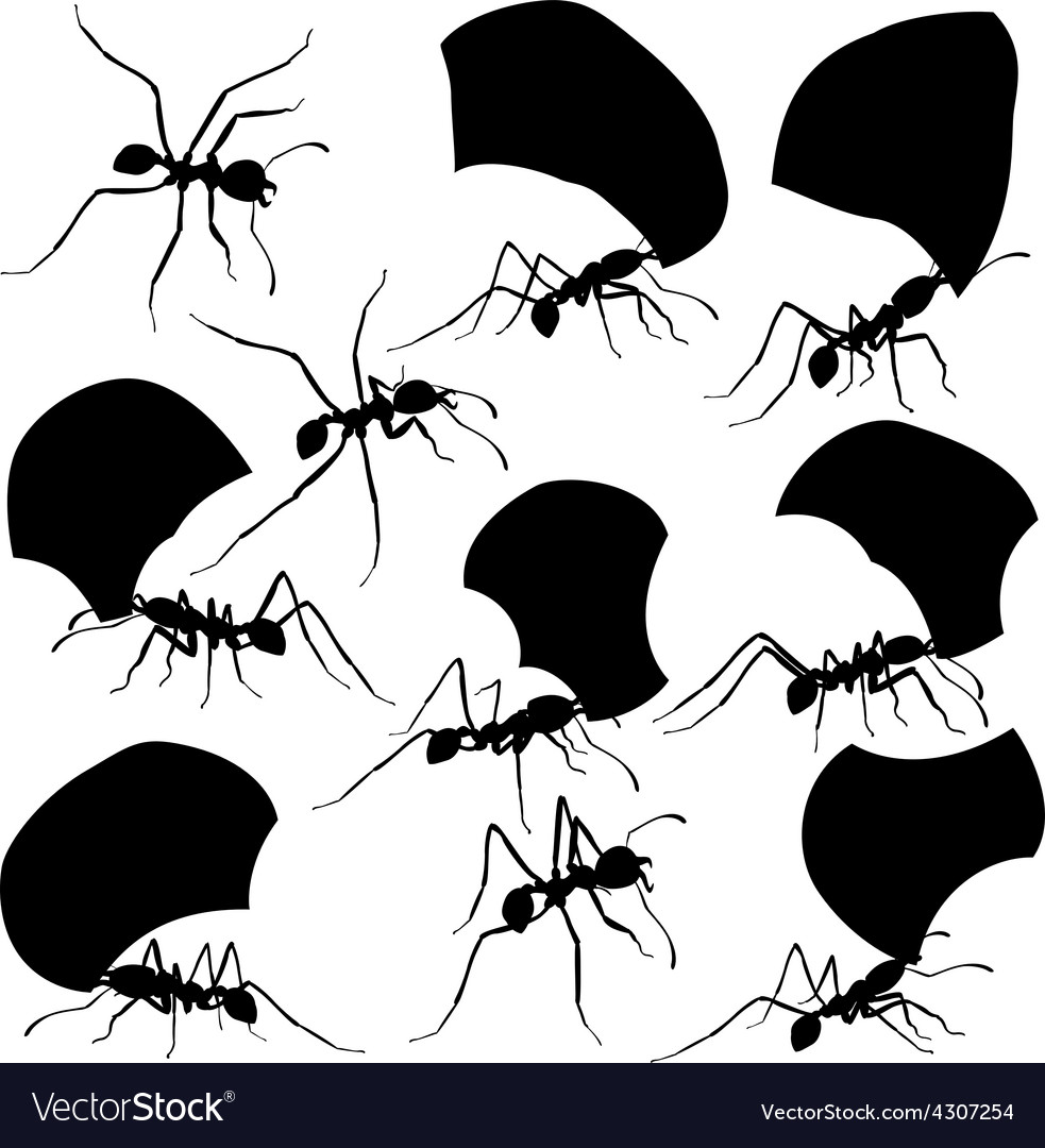 Leaf cutter ants vector