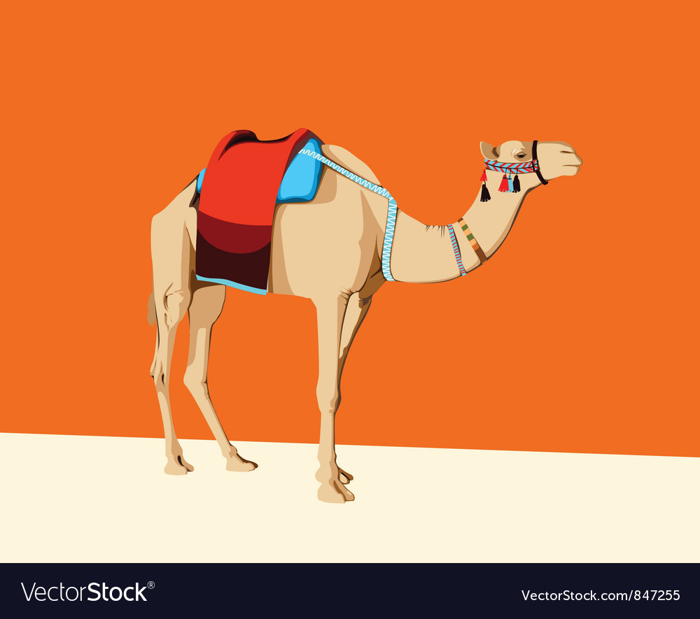 Camel with a saddle vector | Price: 1 Credit (USD $1)