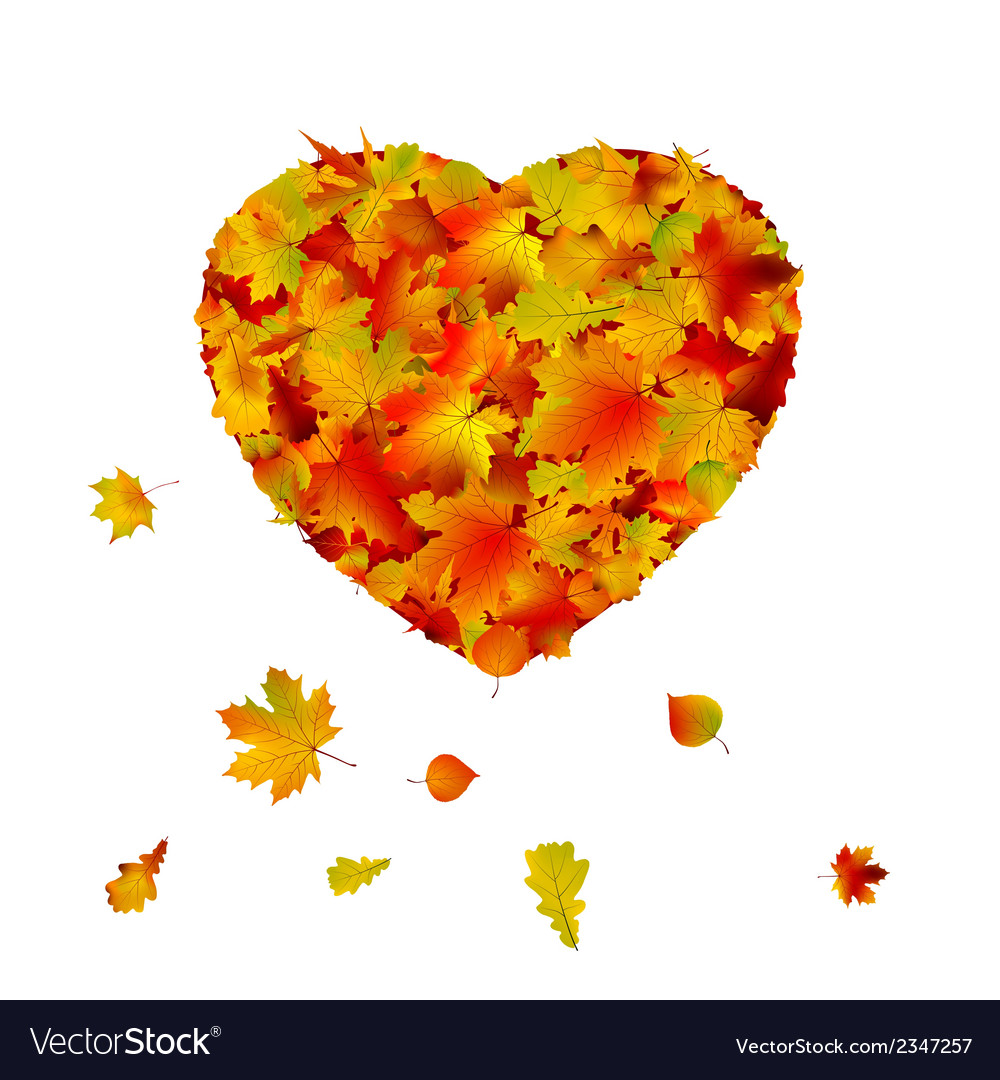 Heart shape made from autumn leaf eps 8 vector | Price: 1 Credit (USD $1)