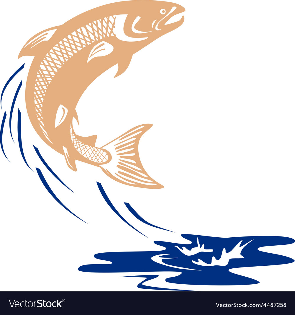 Atlantic salmon fish jumping water isolated vector | Price: 1 Credit (USD $1)