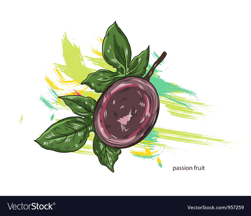 Passion fruit with colorful splashes vector | Price: 1 Credit (USD $1)