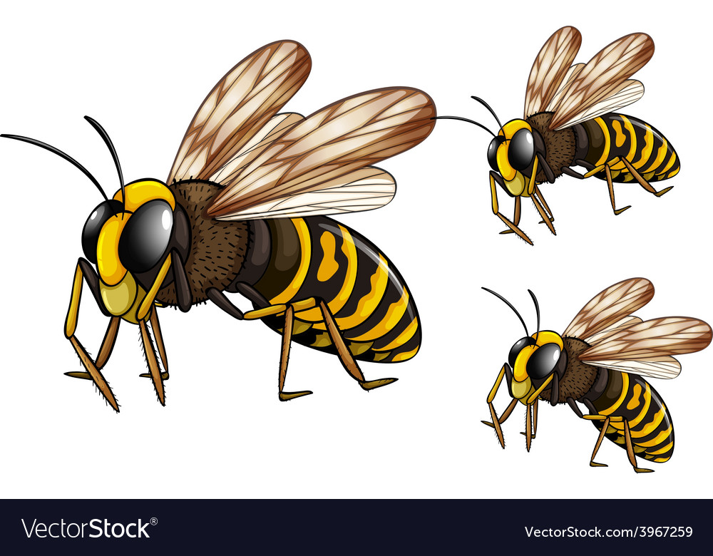 Wasps vector | Price: 1 Credit (USD $1)