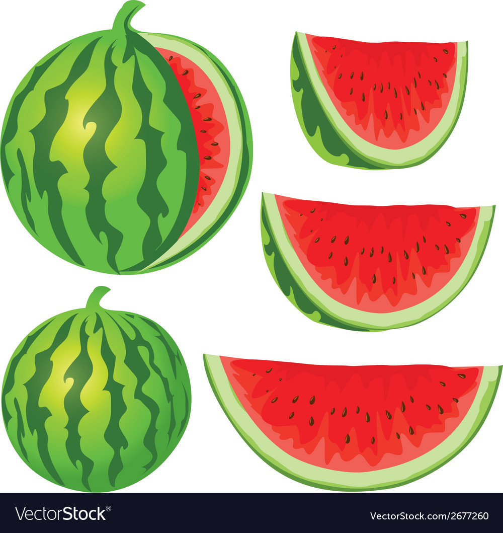 Water melon vector | Price: 1 Credit (USD $1)