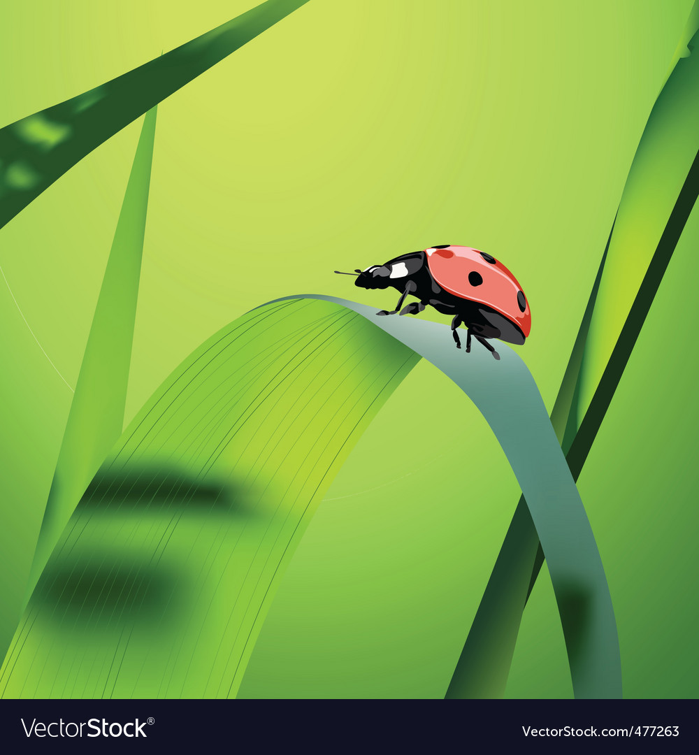 grass vector | Price: 1 Credit (USD $1)