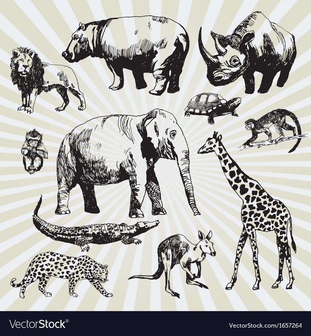 Exotic animals vector | Price: 1 Credit (USD $1)