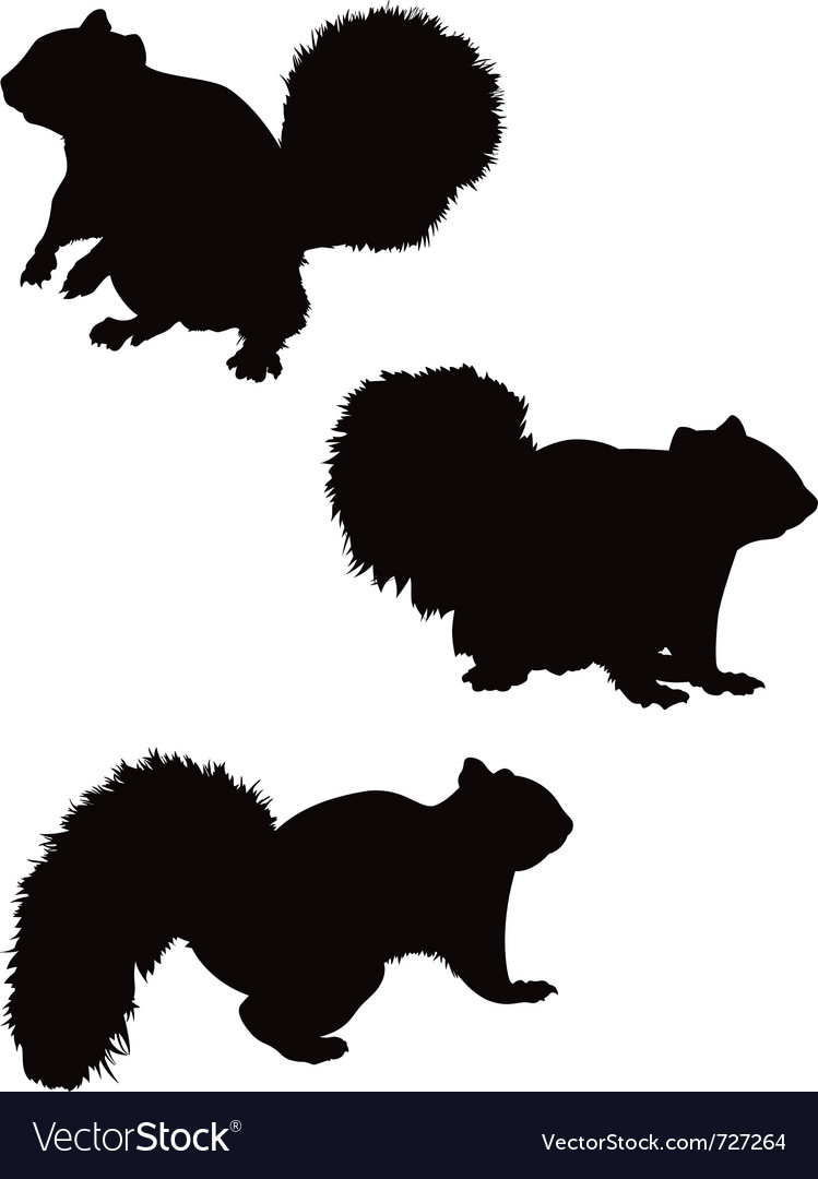 Squirrel silhouettes vector | Price: 1 Credit (USD $1)
