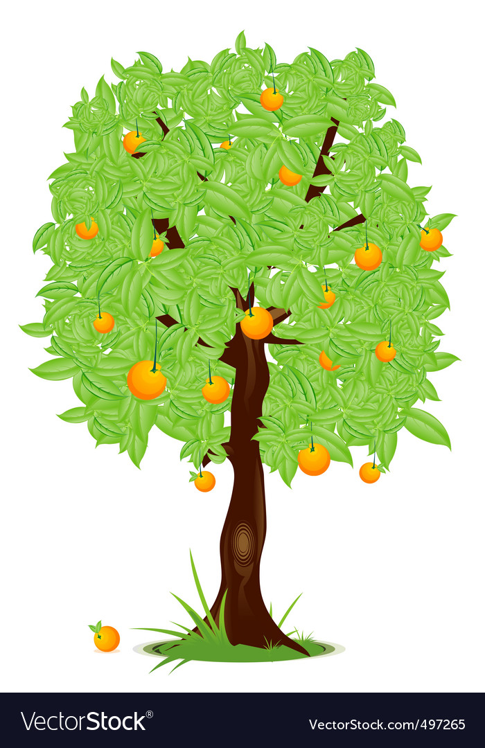 Orange tree vector | Price: 1 Credit (USD $1)