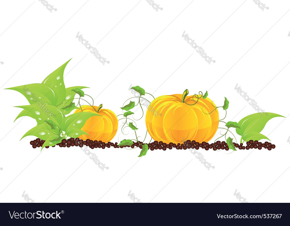 Pumpkins grow in a garden vector | Price: 1 Credit (USD $1)