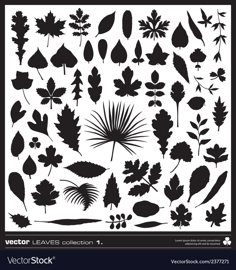 Leaves silhouettes vector | Price: 1 Credit (USD $1)