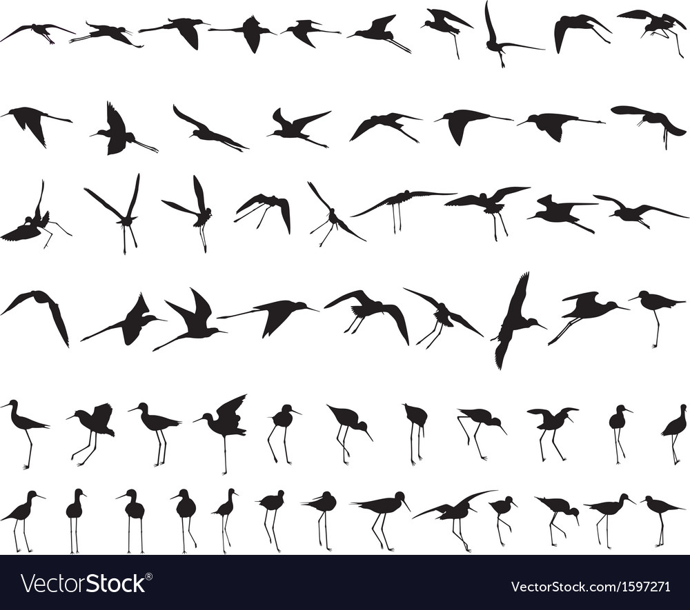 Sixty black-winged stilts vector | Price: 1 Credit (USD $1)
