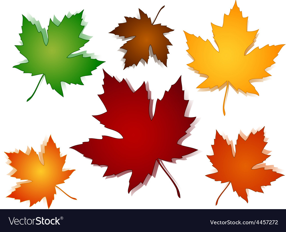 Maple leaves fall color options vector | Price: 1 Credit (USD $1)