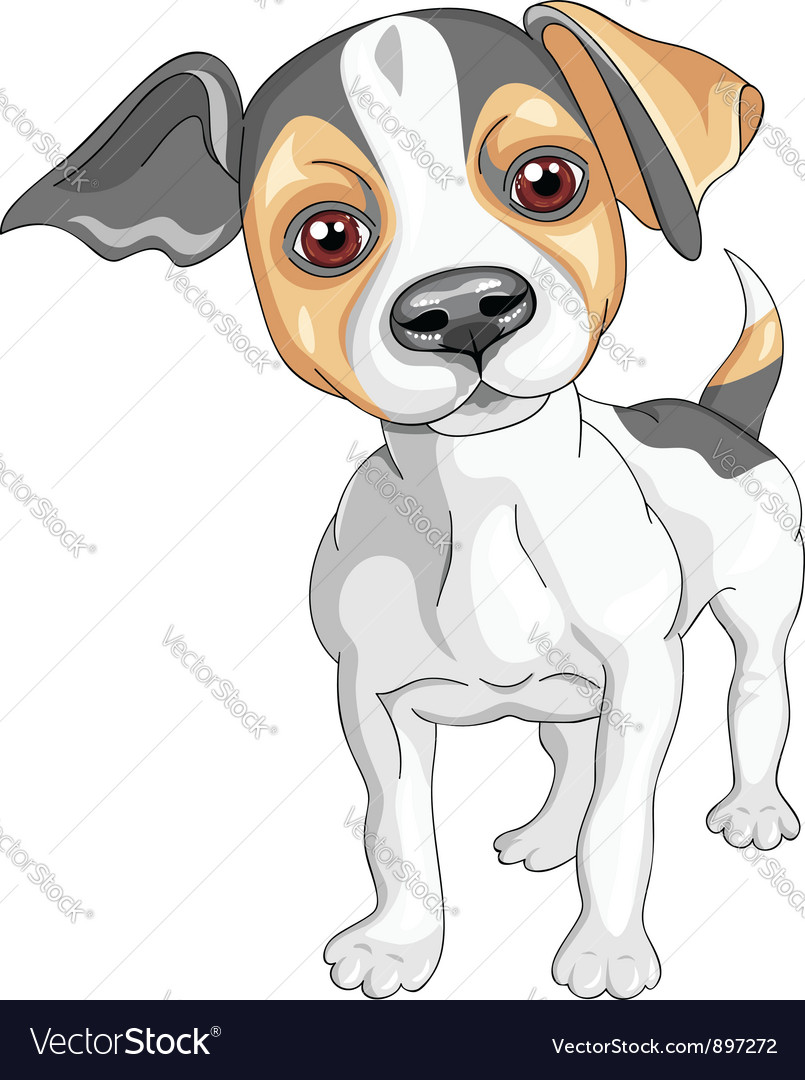 Sketch dog jack russell terrier breed vector | Price: 3 Credit (USD $3)