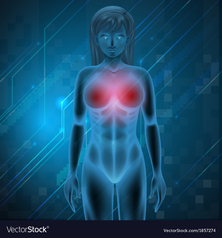 Human breast vector | Price: 1 Credit (USD $1)