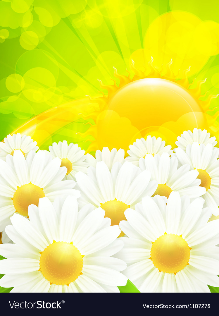 Chamomile background vector | Price: 3 Credit (USD $3)