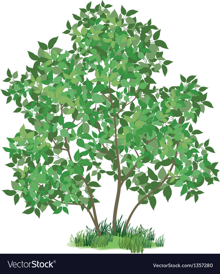 Lilac tree and green grass vector | Price: 1 Credit (USD $1)