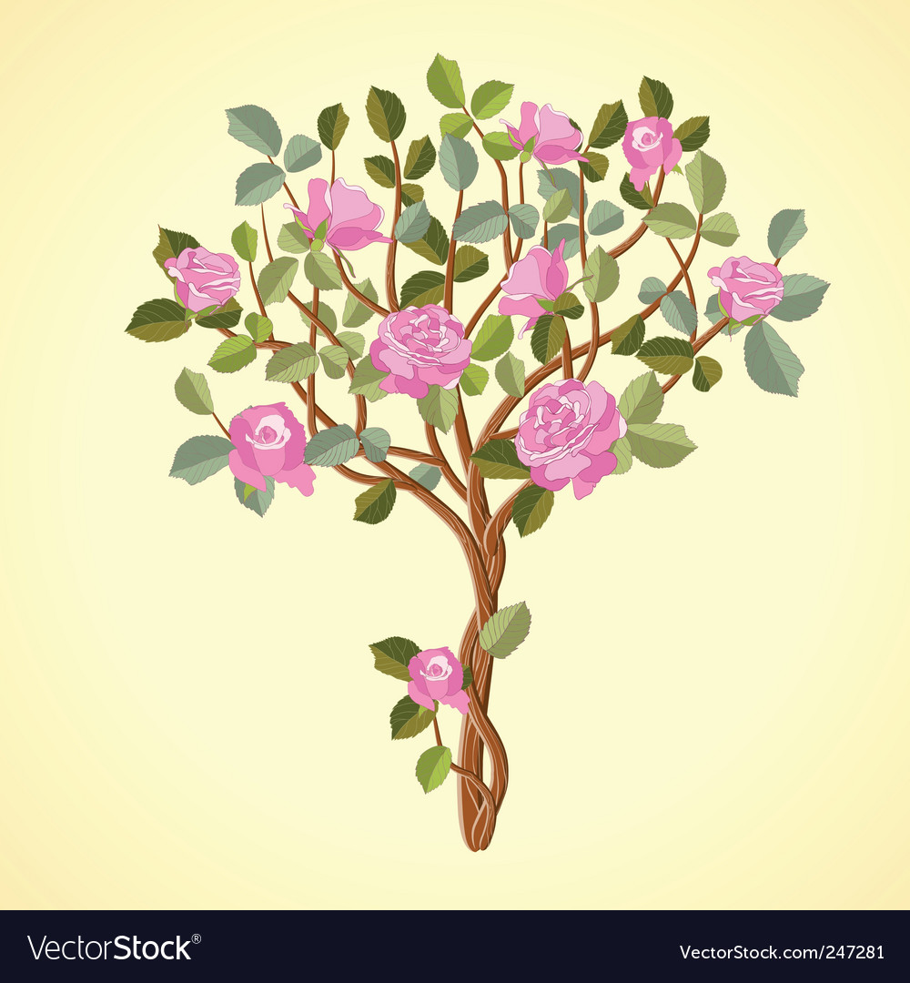 Roses tree vector | Price: 1 Credit (USD $1)